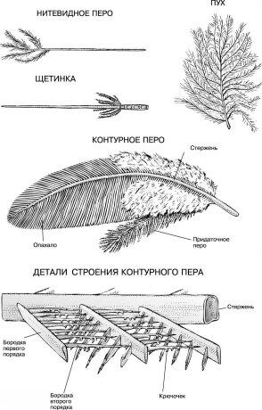 внешнего строения птицы